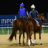 Dubai World Cup -Morning works 3/23/17, photo by Mathea Kelley/Dubai Racing Club<br /> Gun Runner, Dubai World Cup