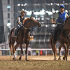 Dubai World Cup -Morning works 3/24/17, photo by Mathea Kelley/Dubai Racing Club<br /> Gun Runner Dubai World Cup