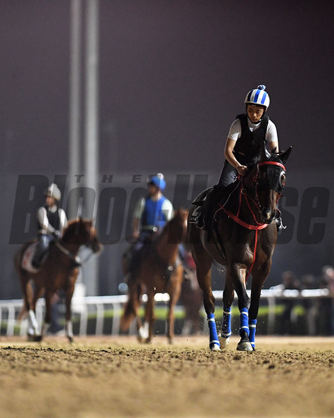 Dubai World Cup -Morning works 3/24/17, photo by Mathea Kelley/Dubai Racing Club