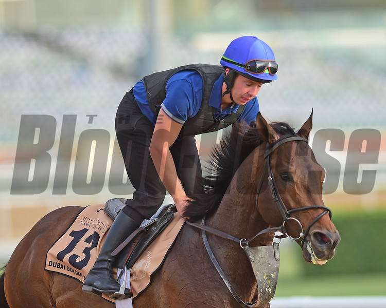 Dubai World Cup -Morning works 3/22/17, photo by Mathea Kelley/Dubai Racing Club<br /> Wild Dude, Dubai Golden Shaheen