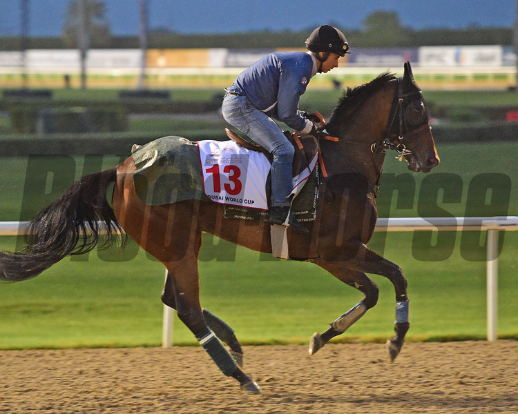 Dubai World Cup -Morning works 3/22/17, photo by Mathea Kelley/Dubai Racing Club<br /> Furia Cruzada, Dubai World Cup