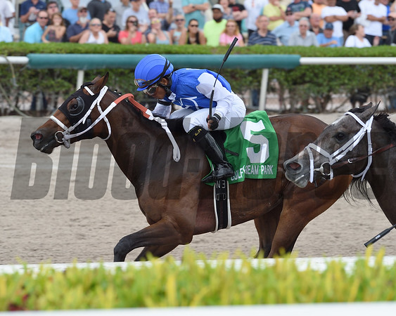Wildcat Kate wins the 2017 Old Hat Stakes<br /> Coglianese Photos/Lauren King