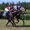 Nauti Buoy wins the 2017 Juvenile Turf Stakes<br /> Coglianese Photos