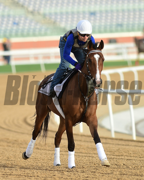 Dubai World Cup -Morning works 3/22/17, photo by Mathea Kelley/Dubai Racing Club<br /> Rb Madymoiselle, Dubai Kahayla Classic