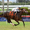 Made You Look wins the 2017 Dania Beach Stakes<br /> Coglianese Photos/Leslie Martin