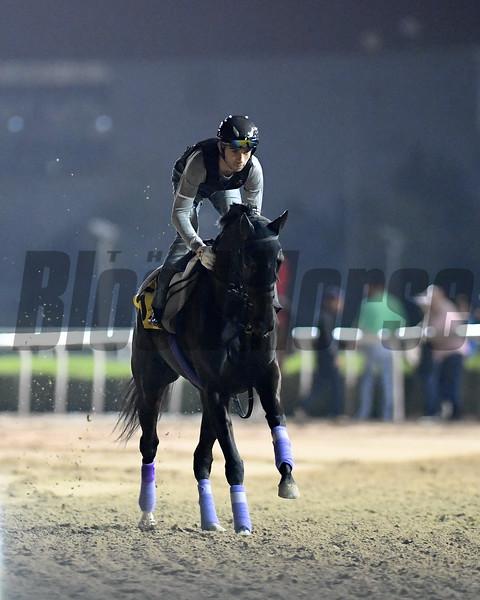 Dubai World Cup -Morning works 3/24/17, photo by Mathea Kelley/Dubai Racing Club<br /> Vivlos, Dubai Turf
