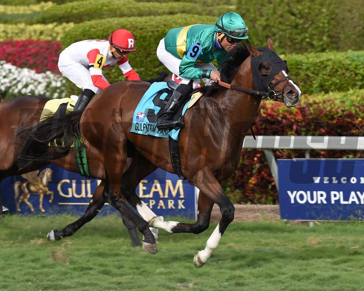 Ticonderoga wins the 2017 Palm Beach Stakes<br /> Coglianese Photos
