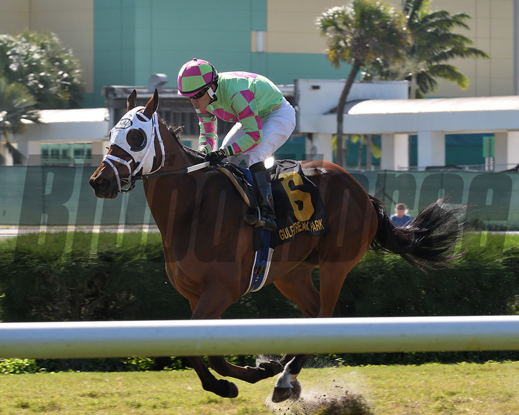 Enterprising wins the 2017 Millions Turf Preview <br /> Coglianese Photos/Lauren KIng