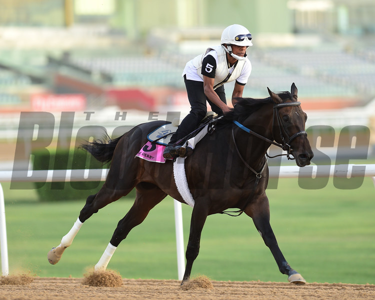 Dubai World Cup -Morning works 3/22/17, photo by Mathea Kelley/Dubai Racing Club<br /> Vettori Kin, UAE Derby
