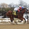 Send It In wins the 2017 Haynesfield Stakes<br /> Coglianese Photos/Chelsea Durand