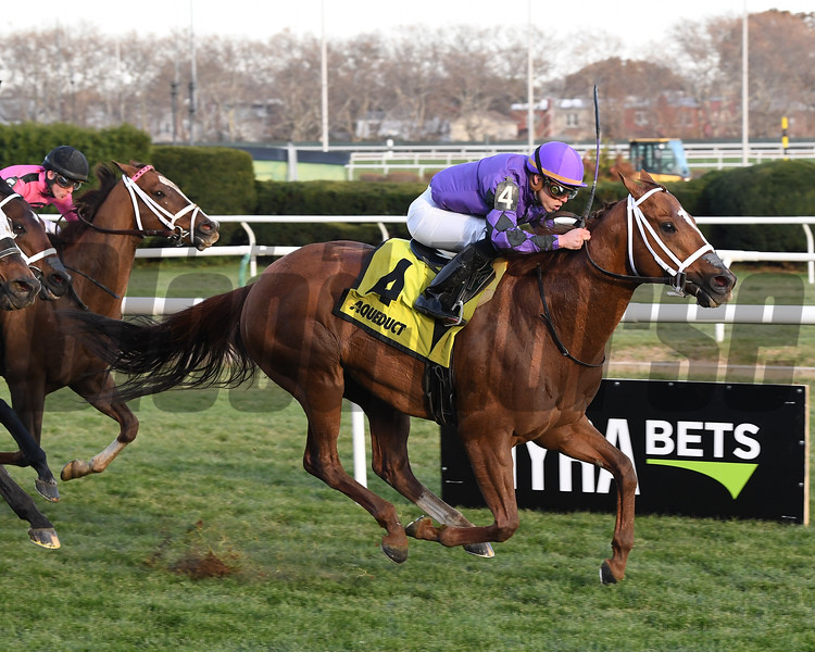 Rainbow Heir wins the 2017 Aqueduct Turf Sprint Championship<br /> Coglianese Photos/Viola Jasko