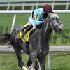 Bird Song wins the 2017 Fred W. Hooper Stakes<br /> Coglianese Photos/Andie Biancone
