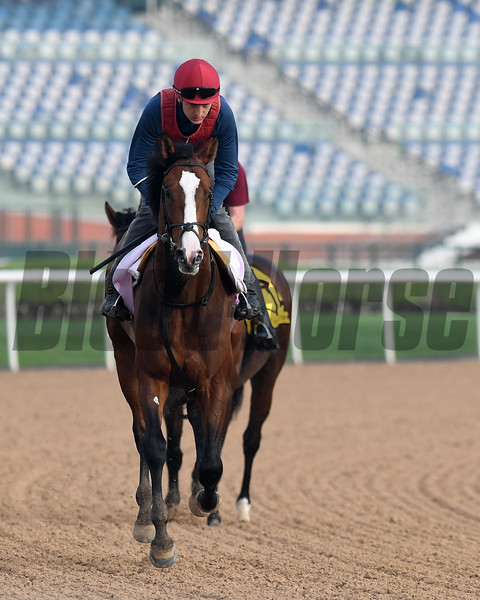 Dubai World Cup -Morning works 3/23/17, photo by Mathea Kelley/Dubai Racing Club<br /> Lancaster Bomber, UAE Derby