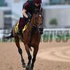 Dubai World Cup -Morning works 3/24/17, photo by Mathea Kelley/Dubai Racing Club<br /> Cougar Mountain, Dubai Turf