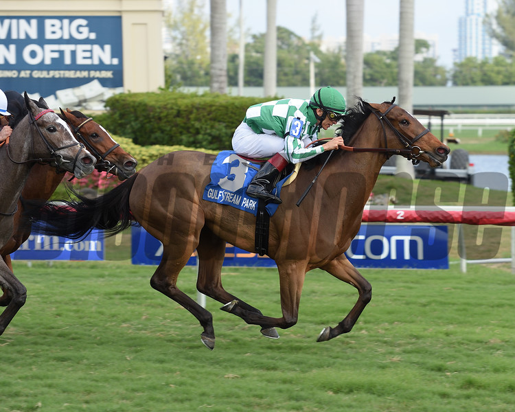 Dream Awhile wins the 2017 Tropical Park Oaks - Division One<br /> Coglianese Photos/Leslie Martin