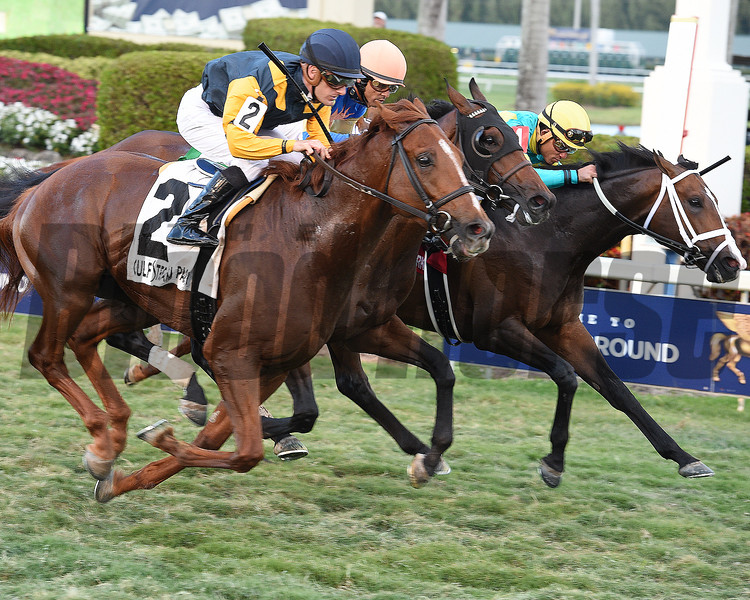 Sadler's Joy wins the 2017 Pan American Stakes<br /> Dave Harmon Photo