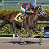 So Sublime - Maiden Win, Gulfstream Park, December 29, 2017<br /> Coglianese Photos/Lauren King