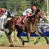 Hard Study wins the 2017 Birdstone Stakes<br /> Coglianese Photos/Susie Raisher