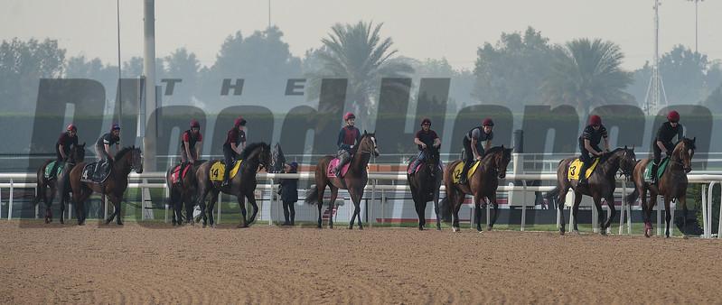 Dubai World Cup -Morning works 3/23/17, photo by Mathea Kelley/Dubai Racing Club<br /> Ballydoyle Trained Horses