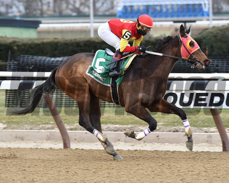 Yorkiepoo Princess wins the 2017 Ruthless Stakes<br /> Coglianese Photos