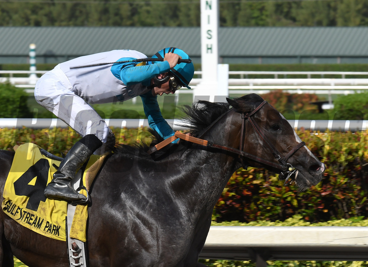 Money Or Love wins $100,000 the Musical Romance Stakes at Gulfstream Park on May 27 2017<br /> Coglianese Photos/Lauren King