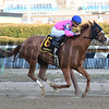 Hot City Girl wins the 2017 Broadway Stakes<br /> Coglianese Photos