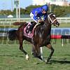 Dickinson wins the 2017 Suwannee River Stakes<br /> Coglianese Photos/Lauren King