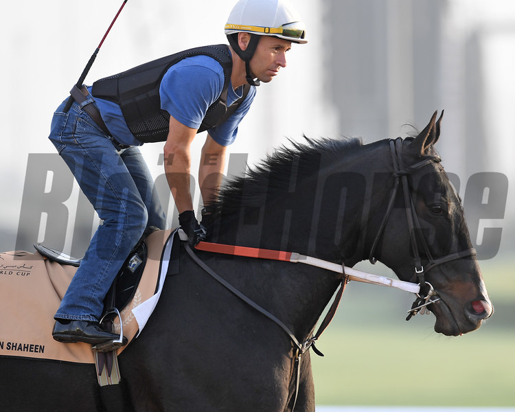 Dubai World Cup -Morning works 3/22/17, photo by Mathea Kelley/Dubai Racing Club<br /> Stall Walking Dude, Dubai Golden Shaheen