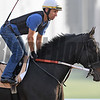 Dubai World Cup -Morning works 3/22/17, photo by Mathea Kelley/Dubai Racing Club<br /> Stall Walking Dude, Dubai Golden Shaheen