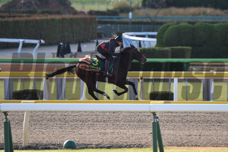 Iquitos - 2017 Japan Cup Preparations<br /> November 24, 2017<br /> Katsumi Saito