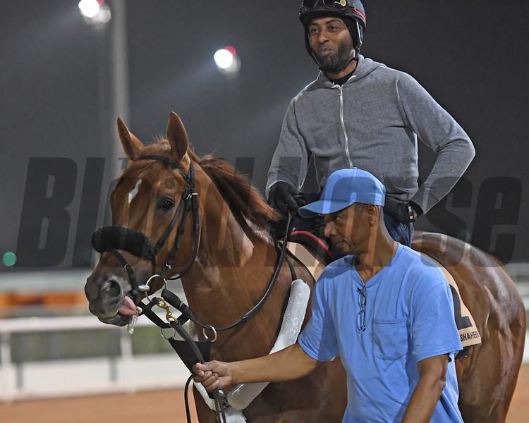 Dubai World Cup -Morning works 3/22/17, photo by Mathea Kelley/Dubai Racing Club<br /> Mindyourbiscuits, Dubai Golden Shaheen