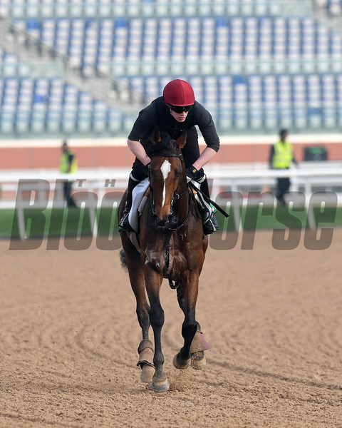 Dubai World Cup -Morning works 3/23/17, photo by Mathea Kelley/Dubai Racing Club<br /> Highland Reel, Dubai Sheema Classic