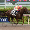 Eight Town - AOC, Gulfstream Park, December 7, 2017<br /> Coglianese Photos/Lauren King