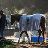 Gun Runner, an expected entrant in the Whitney Stakes cools out after his bath at the Oklahoma Training Center after his final work in preparation for the Grade 1 Whitney Stakes Sunday July 30, 2017 at the Saratoga Race Course  in Saratoga Springs, N.Y. (Skip Dickstein