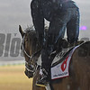 Dubai World Cup -Morning works 3/22/17, photo by Mathea Kelley/Dubai Racing Club<br /> Keen Ice, Dubai World Cup