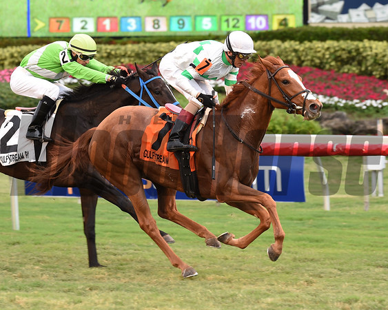 Bellavais wins the 2017 Ginger Brew<br /> Coglianese Photos