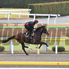 Idaho - 2017 Japan Cup Preparations<br /> November 24, 2017<br /> Katsumi Saito