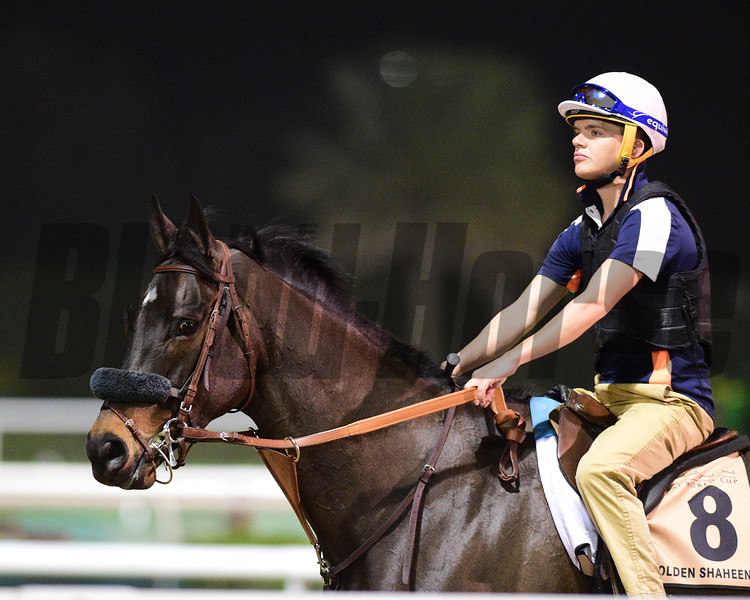 Dubai World Cup -Morning works 3/22/17, photo by Mathea Kelley/Dubai Racing Club<br /> St Joe Bay, Dubai Golden Shaheen