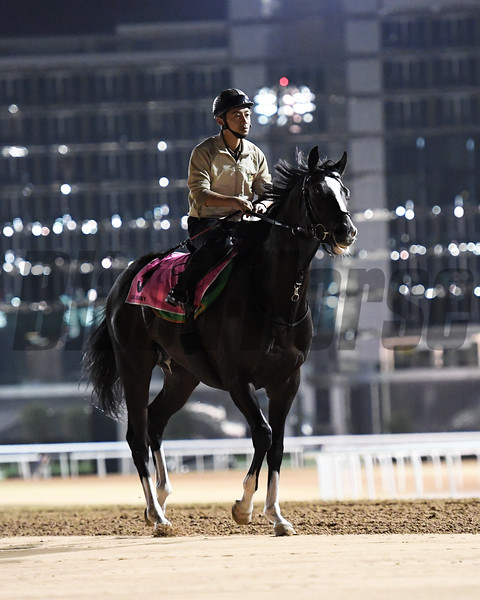 Dubai World Cup -Morning works 3/24/17, photo by Mathea Kelley/Dubai Racing Club<br /> Epicharis, UAE Derby