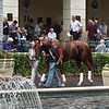 Breaking Lucky - Gulfstream Park, January 26, 2017<br /> Coglianese Photos