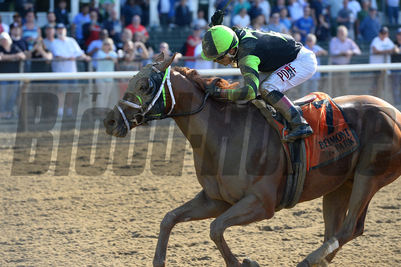 Celtic Chaos wins the 2017 Affirmed Success Stakes<br /> Coglianese Photos/Joe Labozzetta