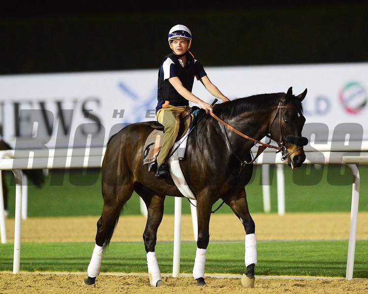 Dubai World Cup -Morning works 3/22/17, photo by Mathea Kelley/Dubai Racing Club<br /> Cool Cowboy, Dubai Golden Shaheen