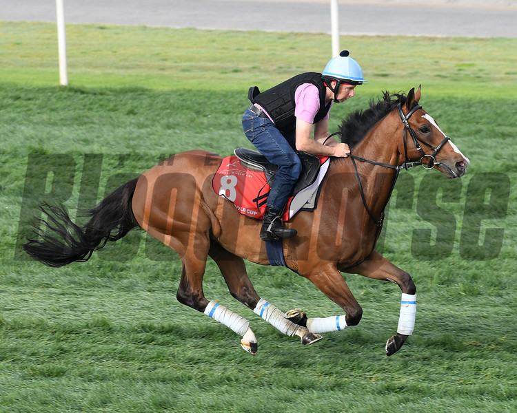 Dubai World Cup -Morning works 3/23/17, photo by Mathea Kelley/Dubai Racing Club<br /> Trip to Paris, Dubai Gold Cup