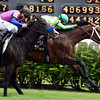 Arklow wins the 2017 American Turf Stakes<br /> Dave Harmon Photo
