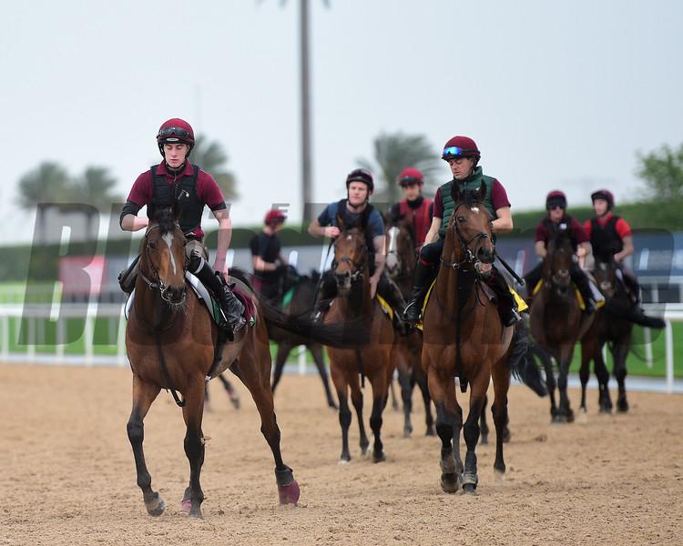 Dubai World Cup -Morning works 3/24/17, photo by Mathea Kelley/Dubai Racing Club<br /> Ballydoyle String, Meydan