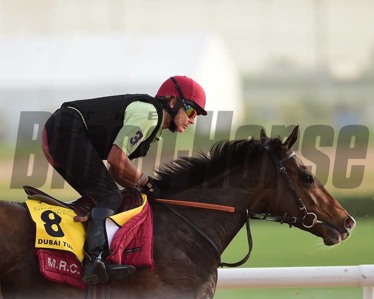 Dubai World Cup -Morning works 3/22/17, photo by Mathea Kelley/Dubai Racing Club<br /> Opal Tiara, Dubai Turf