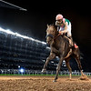 Dubai World Cup  3/25/17, photo by Mathea Kelley/Dubai Racing Club<br /> Arrogate and Mike Smith win the Dubai World Cup