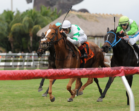 Bellavais wins the 2017 Ginger Brew<br /> Coglianese Photos/Kenny Martin