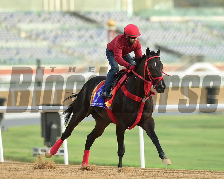Dubai World Cup -Morning works 3/22/17, photo by Mathea Kelley/Dubai Racing Club<br /> Sharp Azteca, Godolphin Mile