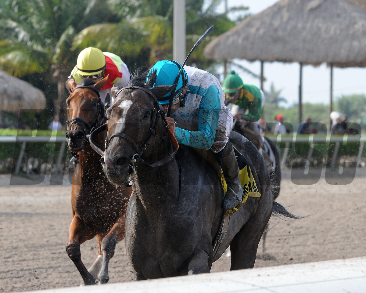 Money Or Love wins $100,000 the Musical Romance Stakes at Gulfstream Park on May 27 2017<br /> Coglianese Photos/Kenny Martin